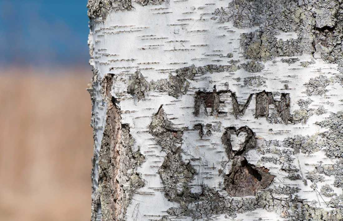 Kevin, 4 år, dödades i Dottevik utanför Arvika för 19 år sedan. Arkivbild.