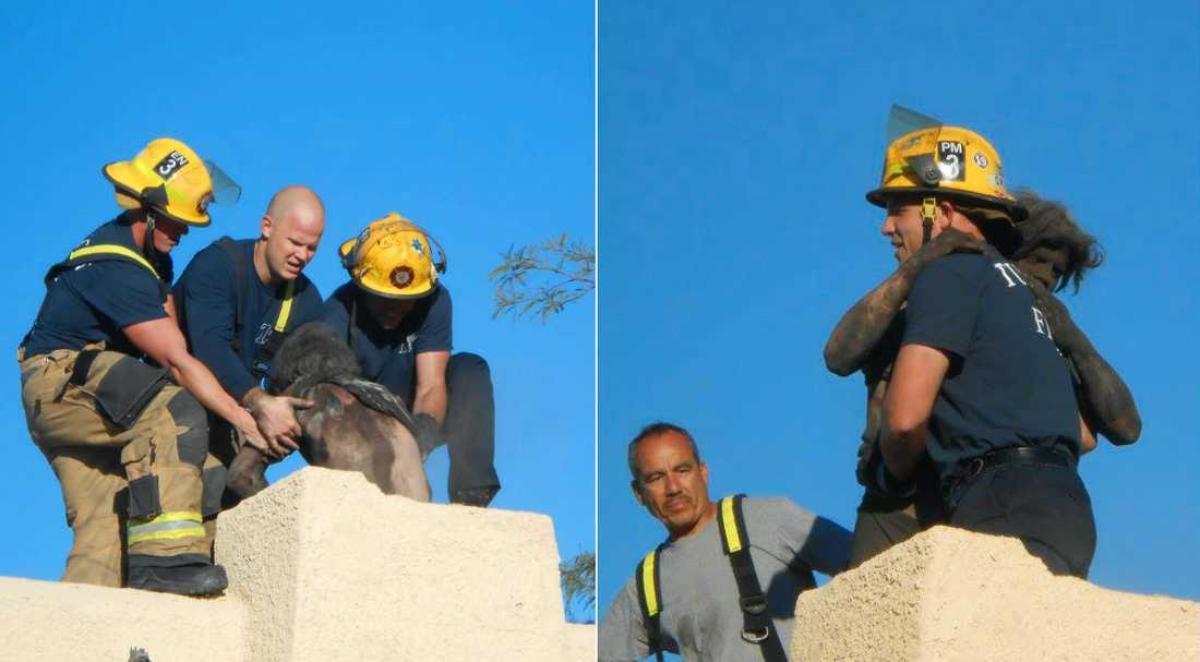 Mannen fick hjälp av brandkåren då han fastnat i skorstenen.