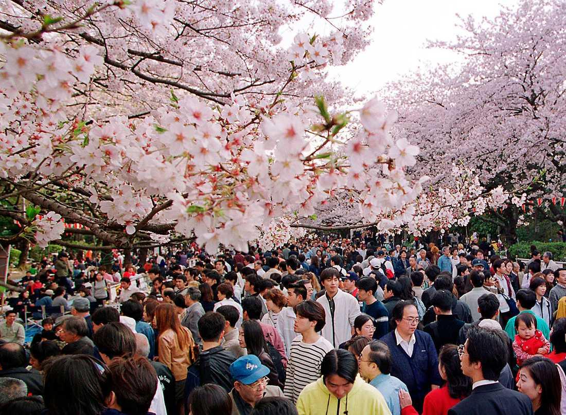 VÄRLDENS RIKASTE STAD Tokyos BNP lär vara det högsta bland världens städer och når svindlande 1520 miljarder dollar (över 10 biljoner kronor).