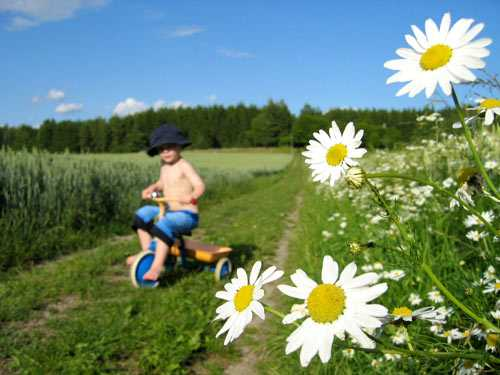 """""""Landet, sommar och sol"""""""
