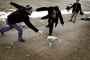 SMITTAN PÅ VÄG? Fågelinfluensan står på Europas tröskel. Nu har den dödliga smittan nått Istanbul.