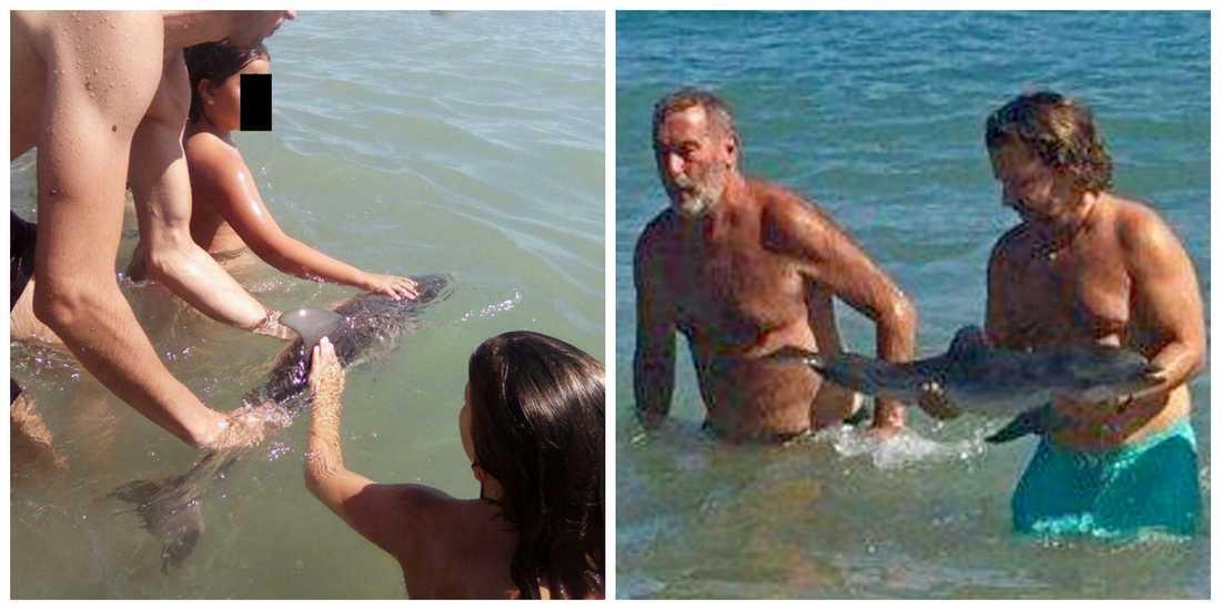 Turisterna stormade fram och omringade delfinungen.