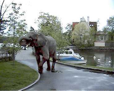 Lubni är ute på promenad i natursköna Djursholm.