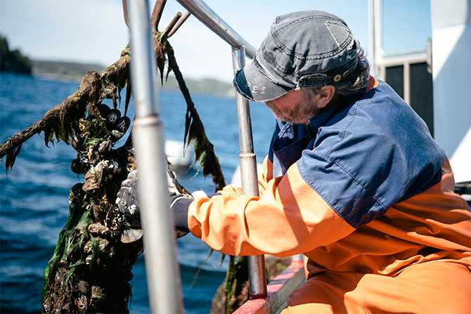 Med hjälp av en vinsch fiskar Janne Bark upp en klase musslor.