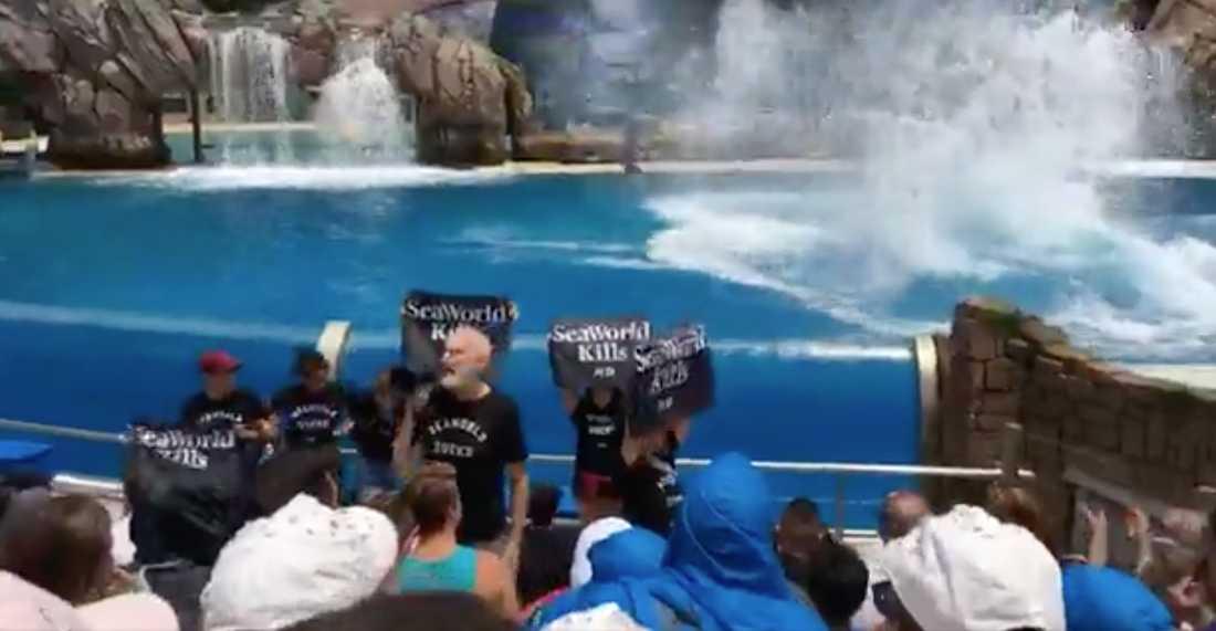 James Cromwell protesterar tillsammans med flera personer under en föreställning på Seaworld.