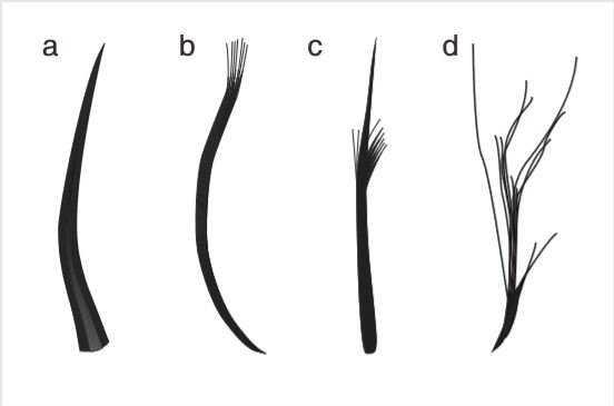 När forskarna studerade två välbevarade fossil från flygödlor upptäckte de fyra olika strukturer på deras hud, var av tre påminde om fjädrar. Precis som vanliga fjädrar är de förgrenade.