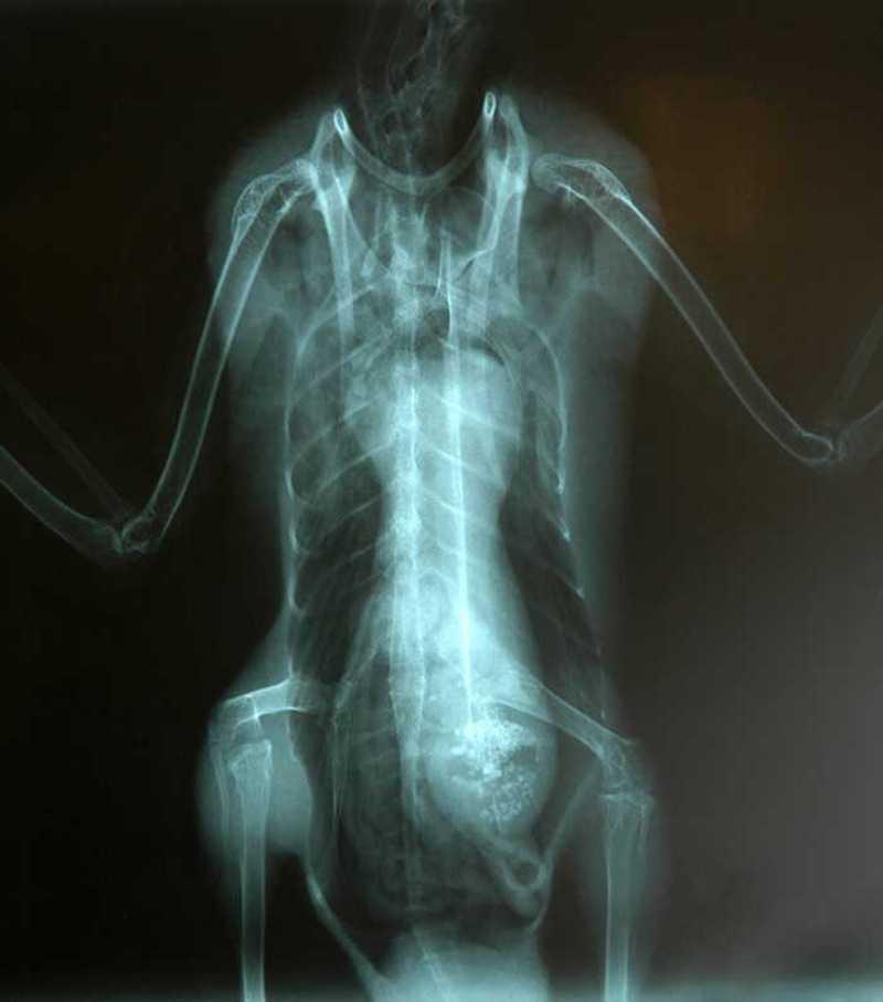 Röntgenbilden togs den 21 maj 2006 och föreställer en skadad anka. I magen påstås den ha en utomjording. Bilden såldes tillsammans med ett äkthetsintyg på auktionssajten eBay. Pengarna gick till fågelforskningen på amerikanska International Bird Rescue Research Center.