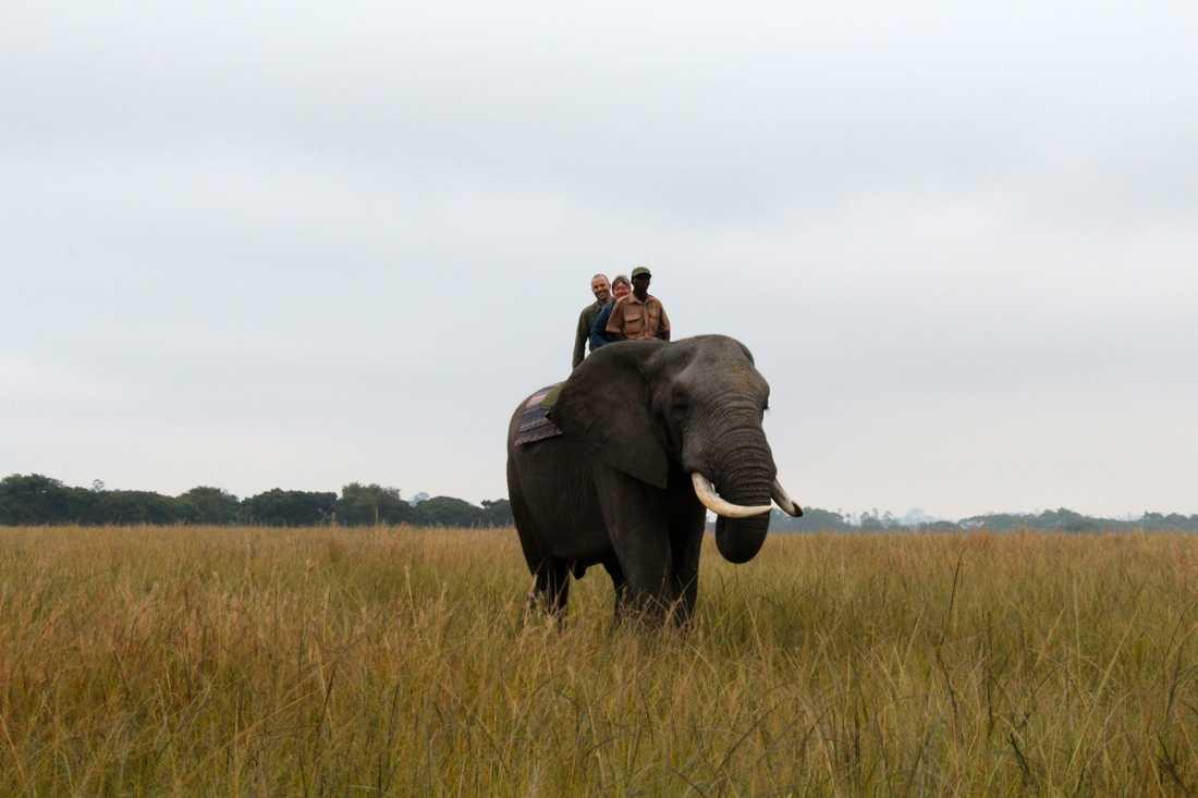 Stenmarck rider elefant.