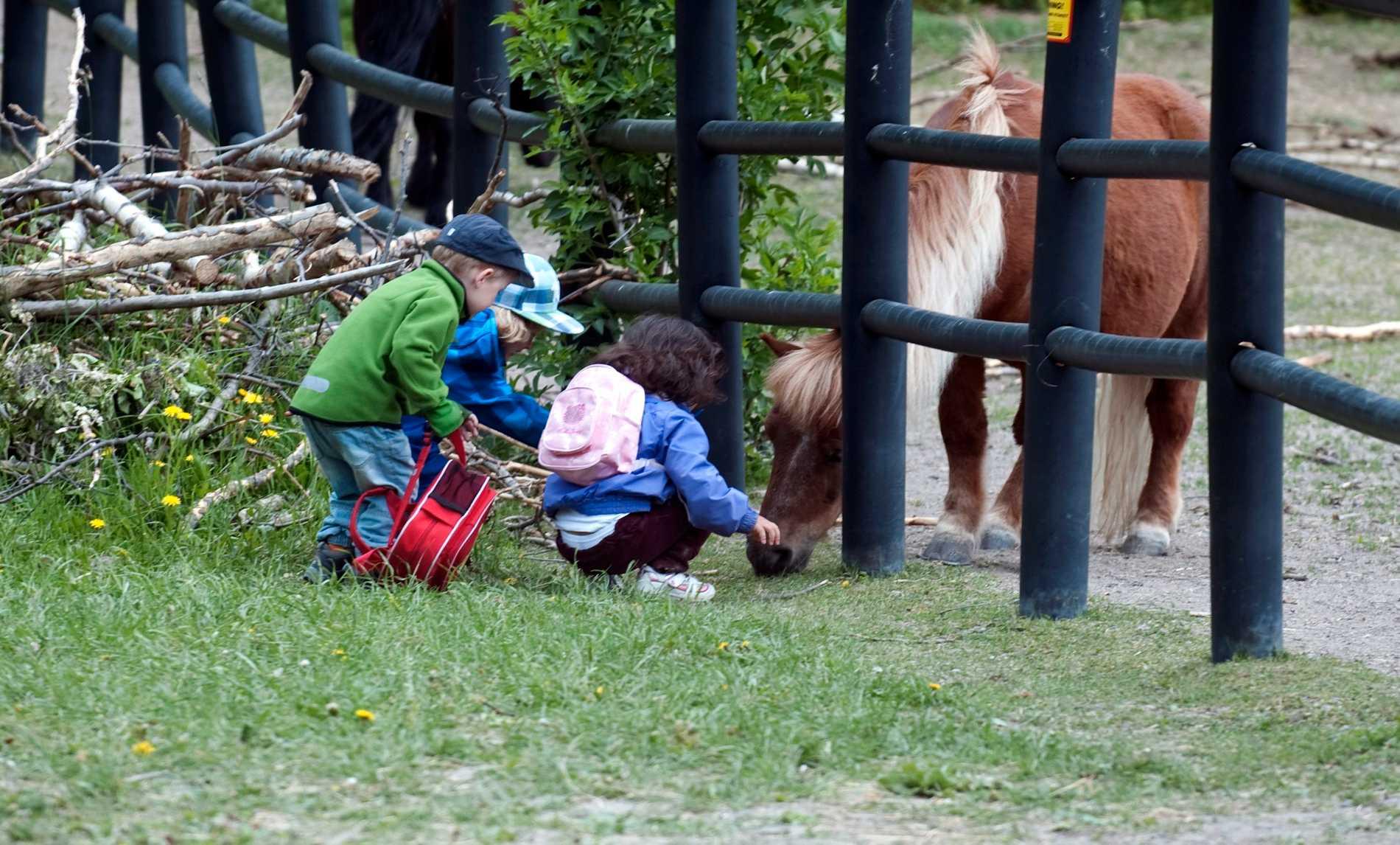 Att låta barnen bekanta sig med djur och natur på en 4H-gård är både mysigt – och gratis.