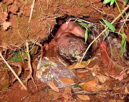 RÄDDAD Den lille pojken hade lämnats att dö i en lergrop i djungeln. Men några kvinnor lyckades hitta den nyfödde pojken, som hade överlevt tack vare värmen från den omgivande leran och näring från moderkakan. Pojken vårdas nu på sjukhus.