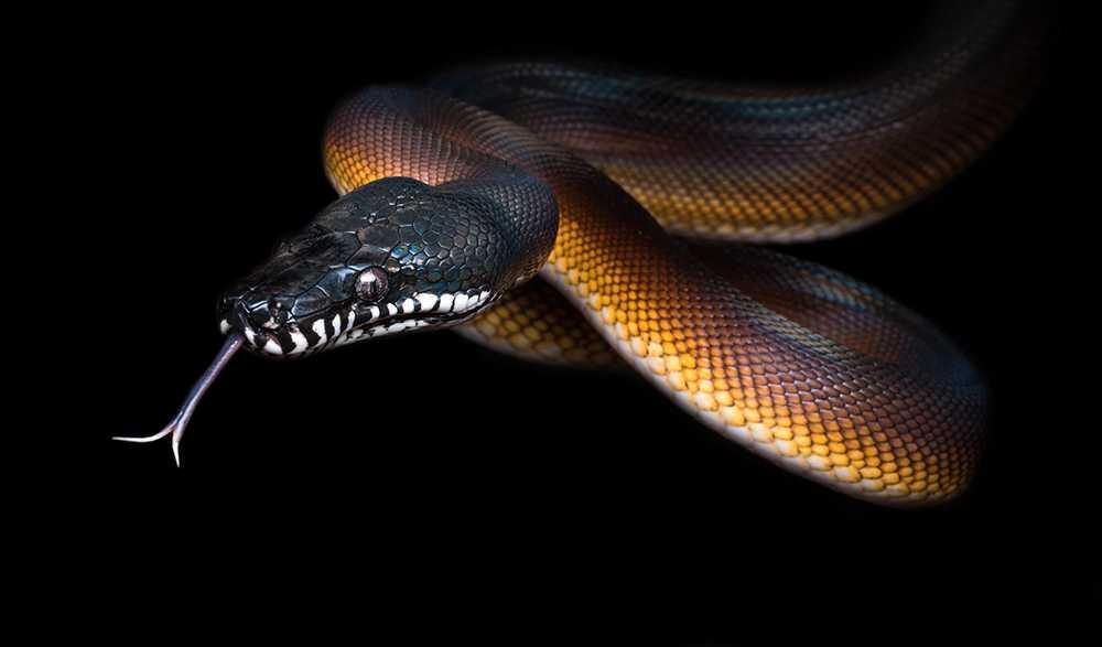 Det är förbjudet att mata ormar med levande djur i Norge.