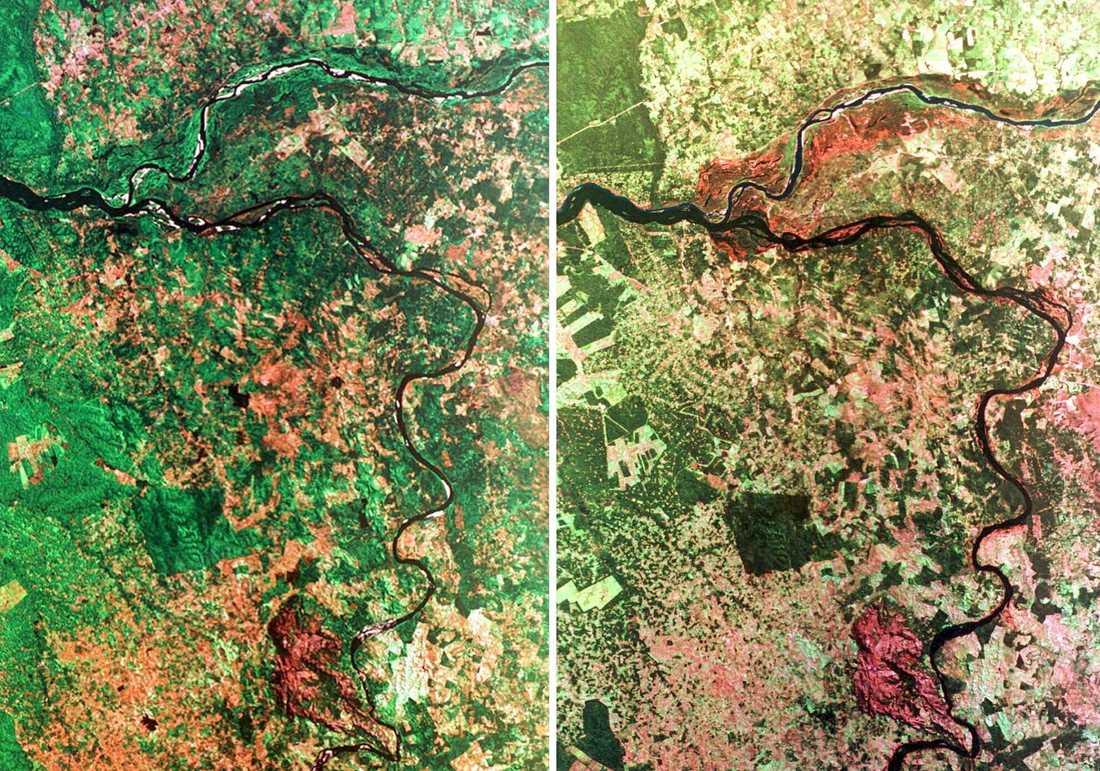 Satellitbild över regnskog i Brasilien (genrebild).