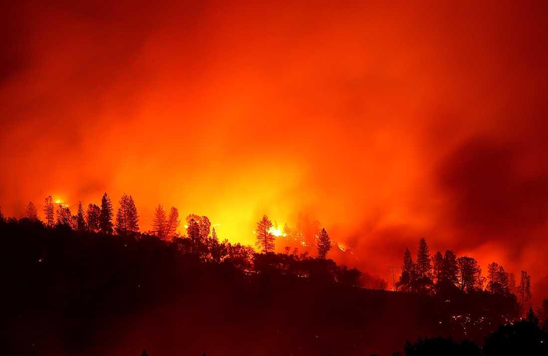 """Jättebranden  """"Camp Fire"""" i Kalifornien."""