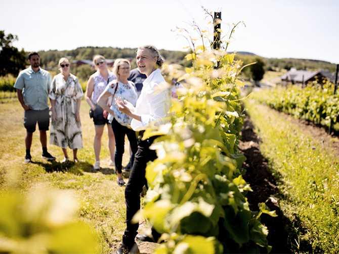 Ästad vingård – här kan du uppleva en fyllig och smakrik weekend.