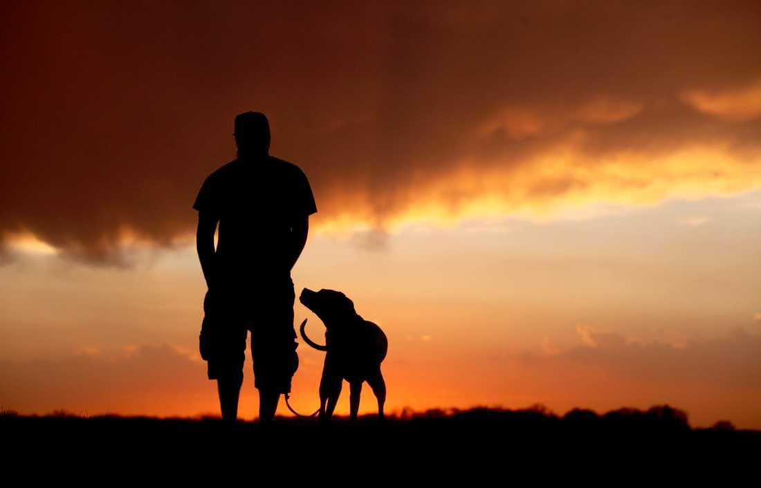 Ärftlighet har en stor betydelse för valet att skaffa hund, visar en ny studie. Arkivbild
