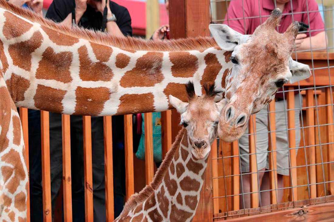 April och den då nyfödde Tajiri.