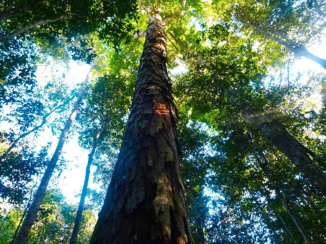 De tropiska regnskogarna är hem för tusentals fall av samevolution mellan djur och växter.