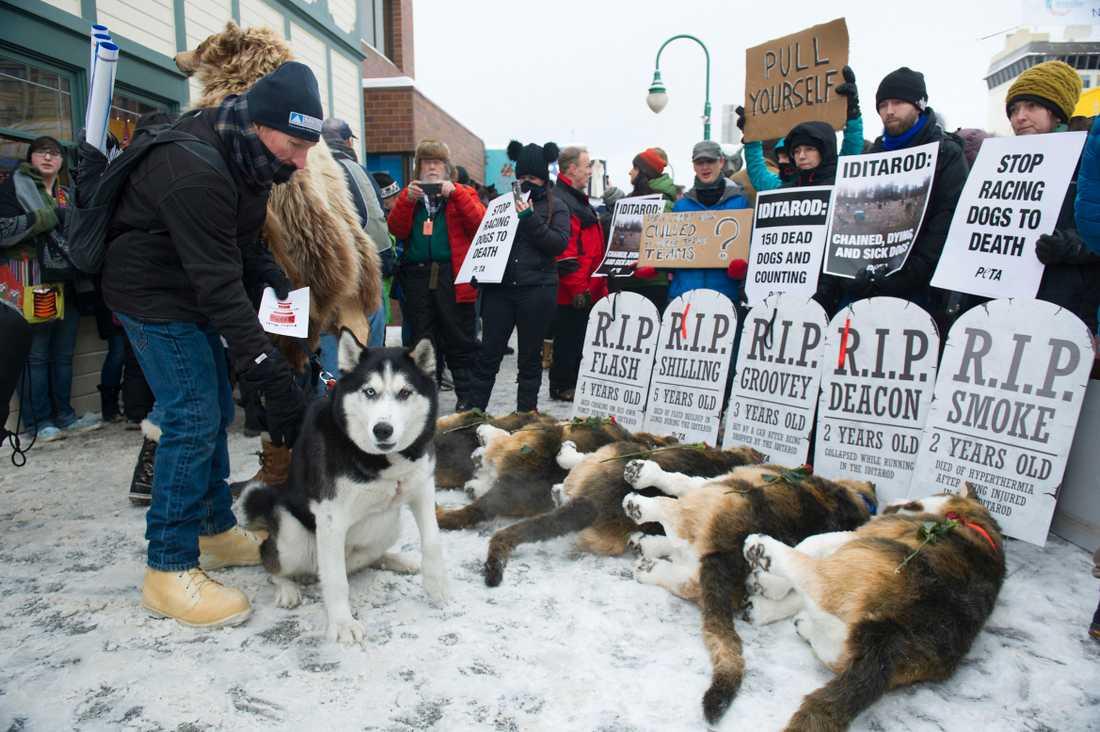 Djurrättsorganisationen PETA protesterar mot hundslädstävlingen i Iditarod, Alaska 2018.