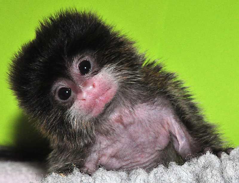 Lille Wilhelm föddes för åtta veckor sedan...