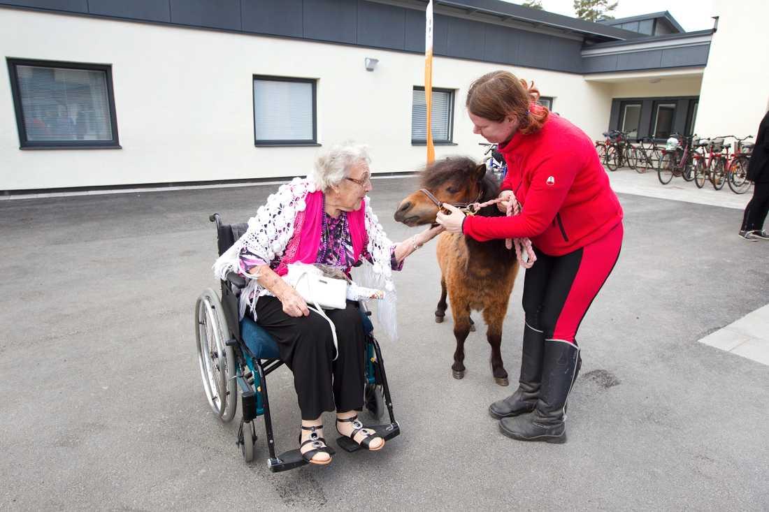 Vårdhästen Allys är en av de nominerade – hon reser runt och träffar pensionärer och barn.