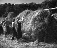 """""""Giftfri mat finns inte"""", skriver professorerna Holger Kirchmann och Lars Bergström."""
