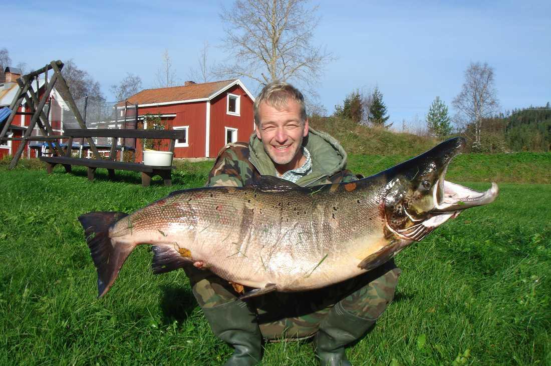 Rekordlax Uwe Lehrer från Medelpad fick 29 kilo lax på kroken.