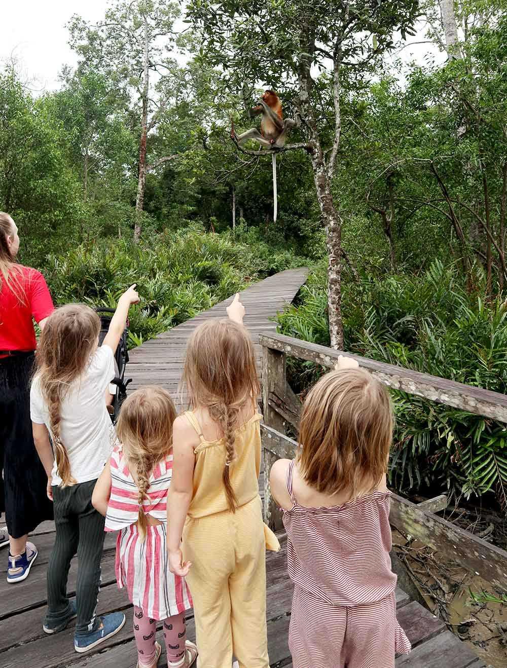 Familjen Holmqvist reste till Borneo och Sepilok för att uppleva de vilda aporna. Många apor vågar komma mycket nära människor.