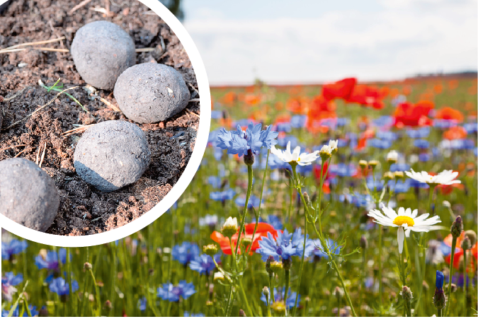 Fröbomba för fler blommor till bin och humlor.