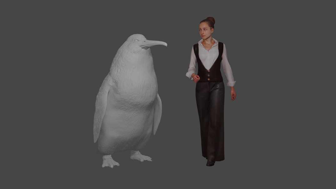 En illustration från Canterburymuseet visar hur stor jättepingvinen var, i relation till en normalstor människa.