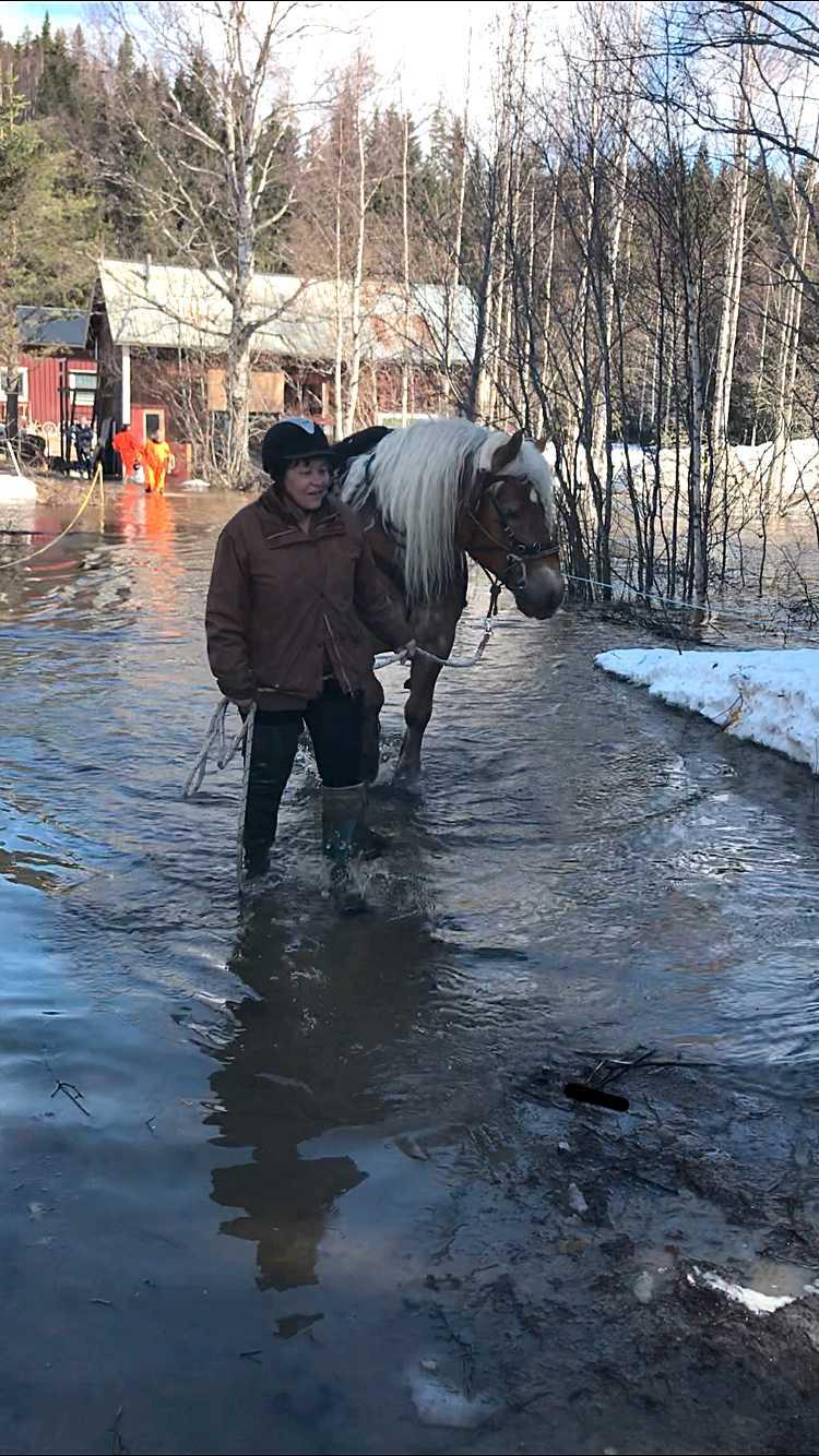 Ann-Katrins två hästar Opus Hagbard och Nadja fick evakueras när vattnet plötsligt började stiga.