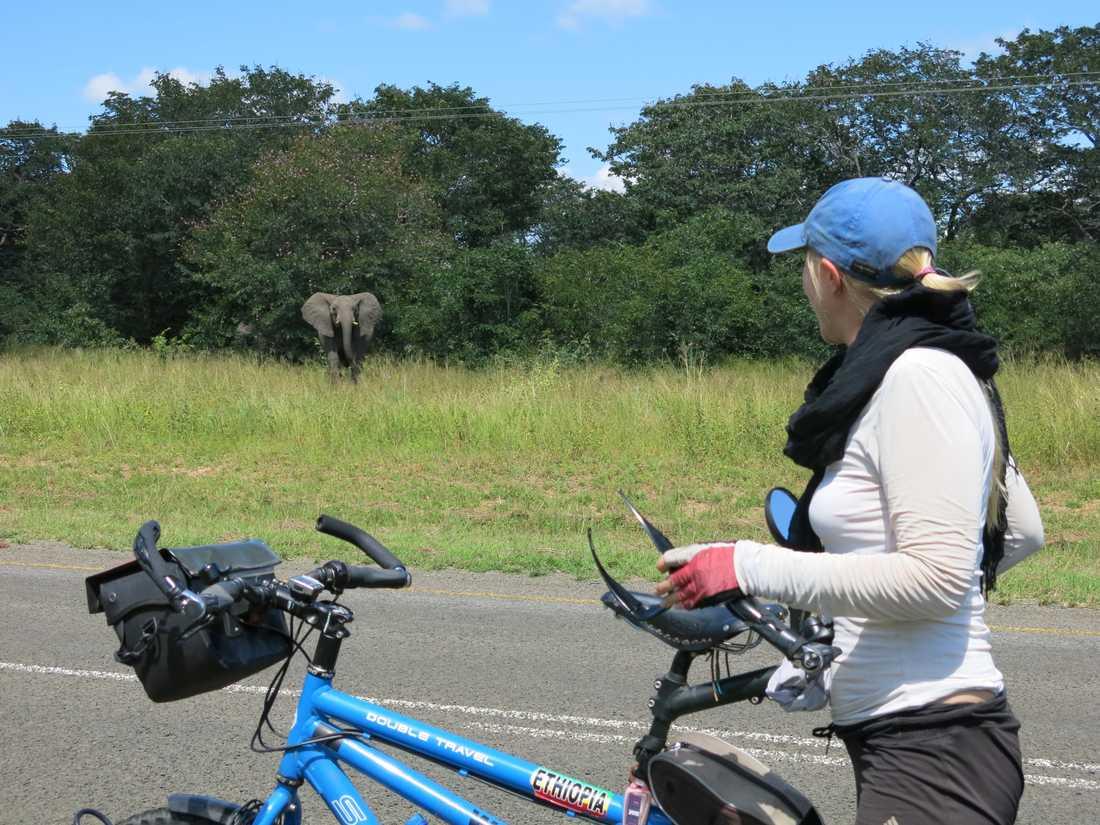 Och i Botswana stötte paret på vilda elefanter.