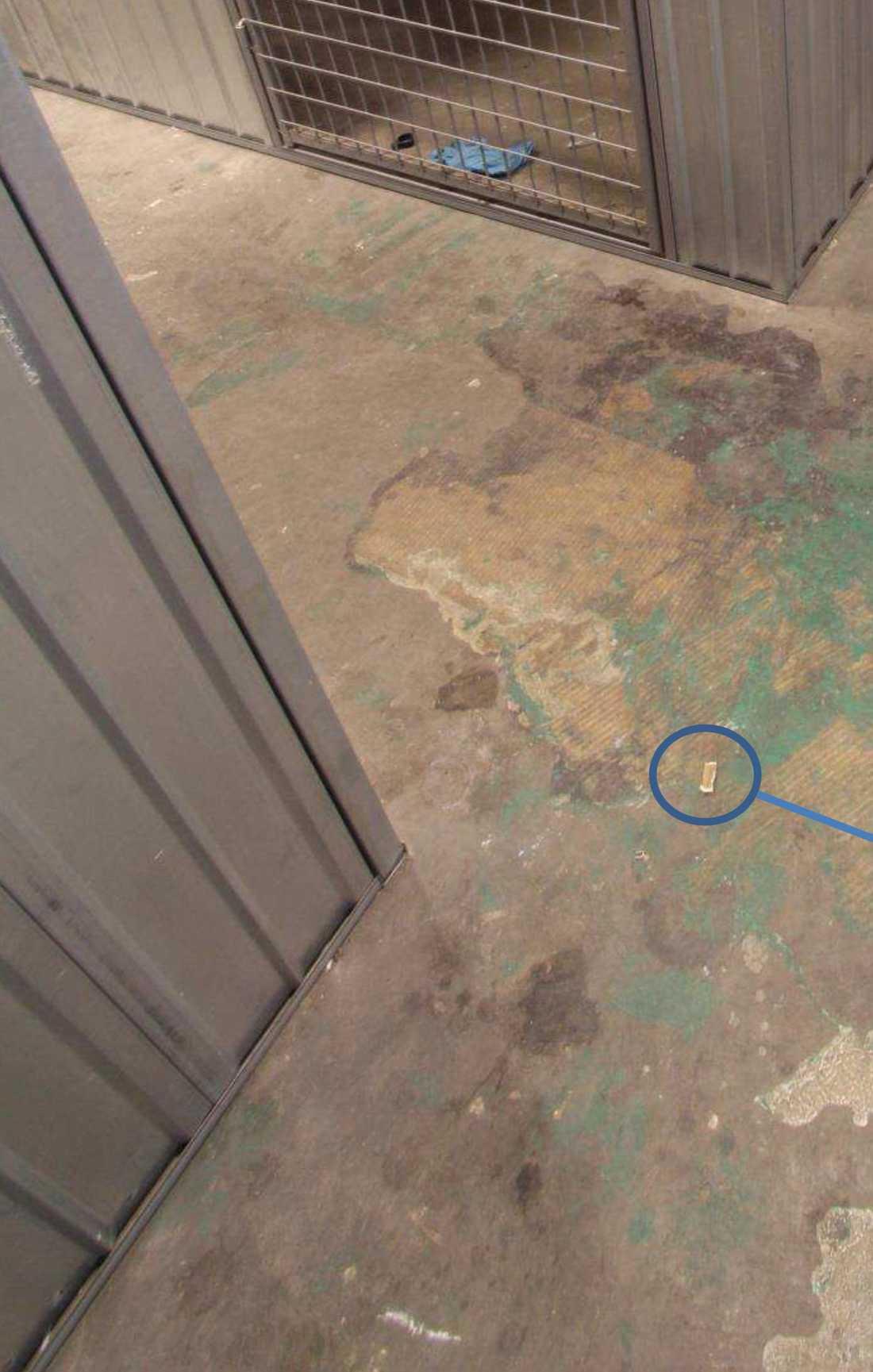 Portionssnus som hittades i källaren har kunnat kopplas till en misstänkt gärningsman – som själv dog tre dagar efter dubbelmordet.