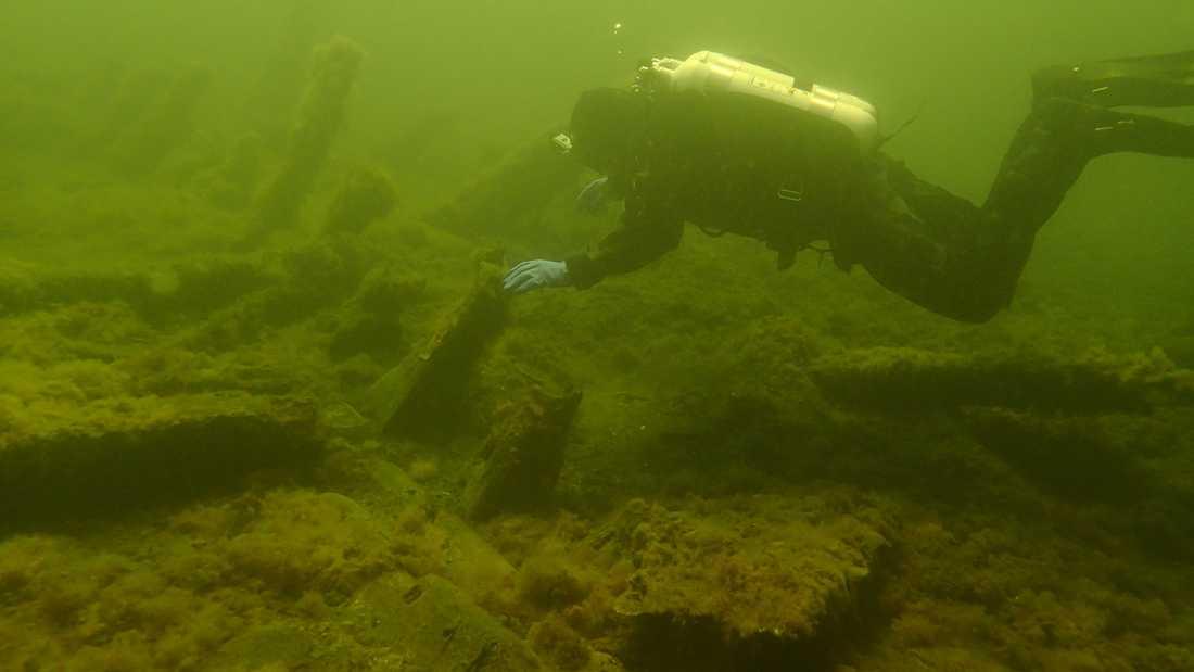 På bilden från 2015 undersöks Gribshunden av dykare.
