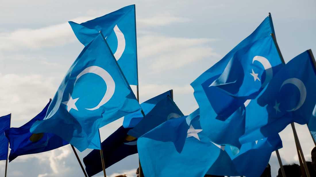 Flaggan för Östturkestan, en stat som har existerat två gånger – under 30 och 40-talet, är en symbol för många uigurer.