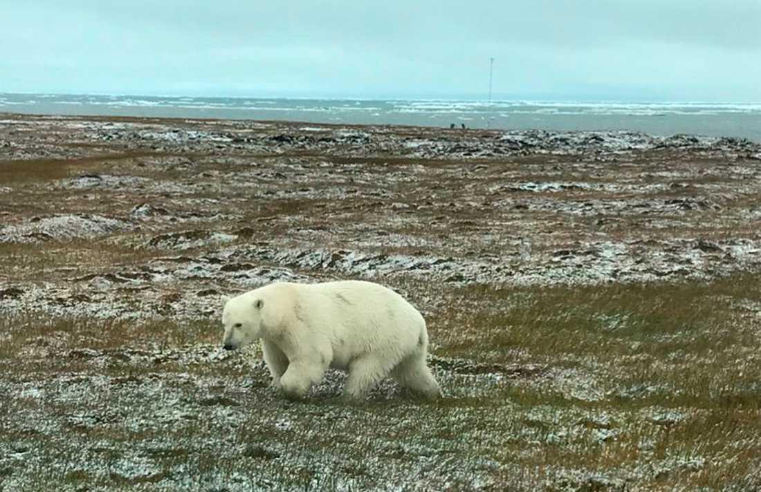 Naturreservatet Arctic National Wildlife Reserve har varit skyddat sedan 1960 och täcker en yta som är sju gånger så stor som Skåne.