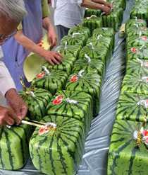 hur växer meloner