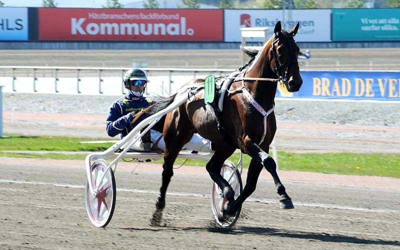 Conrad Lugauers stjärnhäst Spartan Kronos är allvarligt skadad