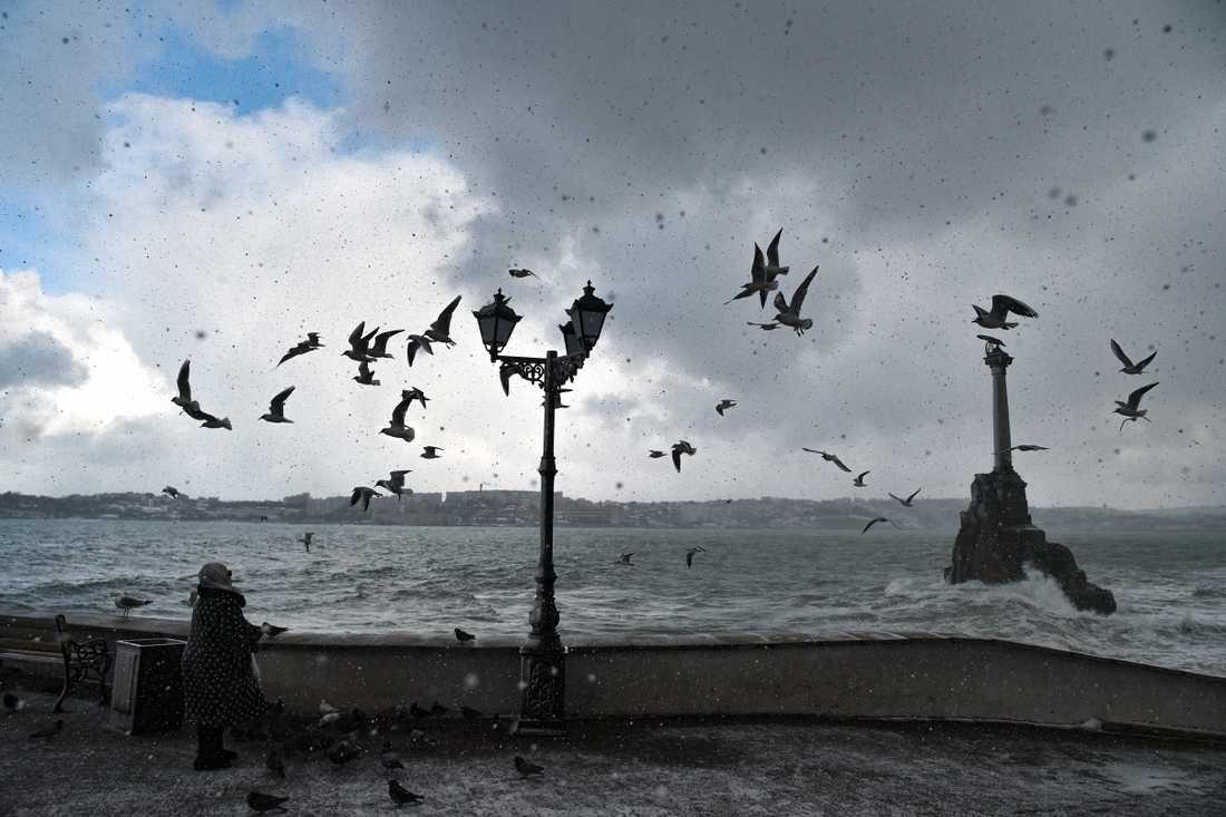Sjöfåglar flyger i vinden vid Sevastopol på Krim. Bild från tidigare i februari.