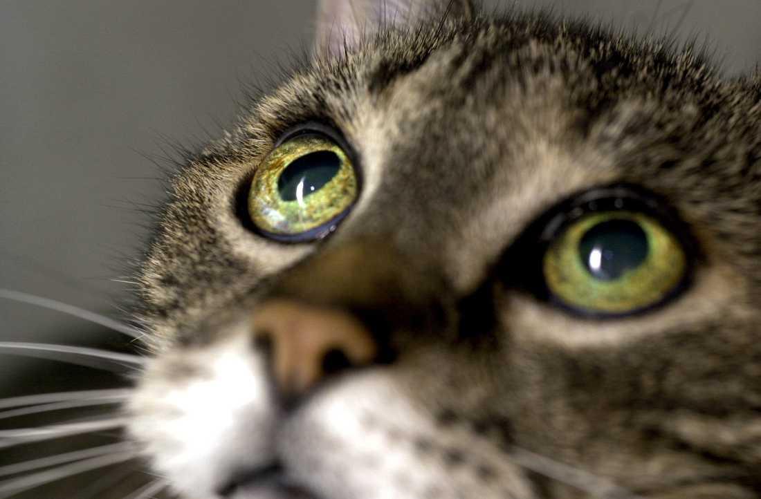 En man med djurförbud har blivit fråntagen 21 katter. Katten på bilden har ingen koppling till händelsen. Arkivbild.