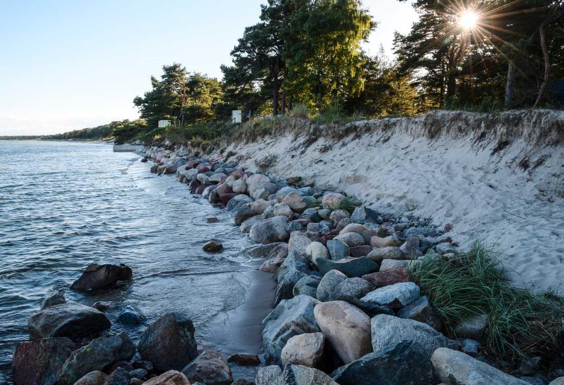 Åhus 2017: Vid Strandvägen i Äspet i Åhus når havet ända upp till skogsbrynet. Arkivbild.