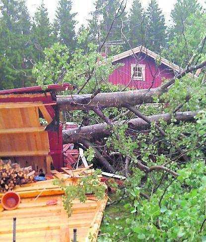 Förödelse Marie Krona i Kestorp utanför Rödeby i Blekinge fick sin vedbod mosad av ett träd.