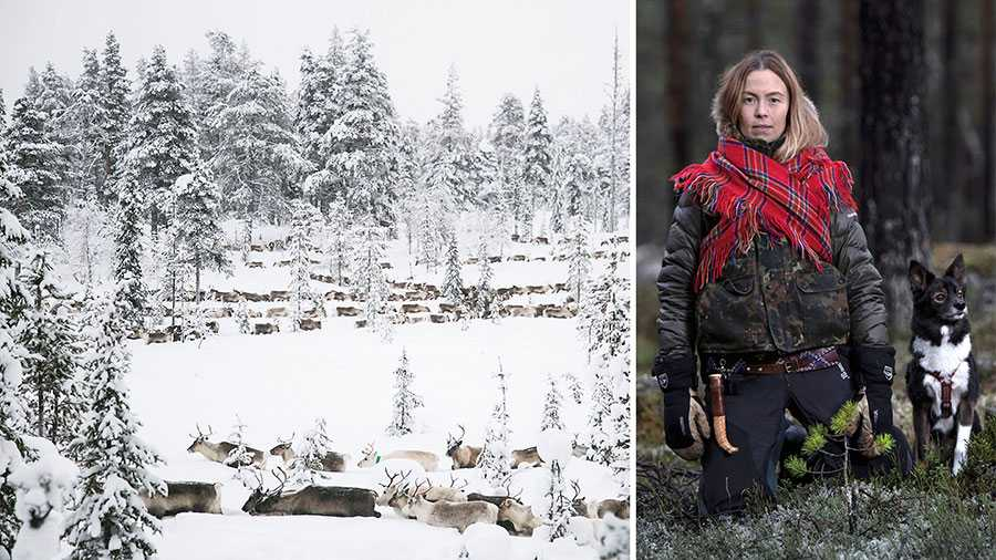 Våra renar svälter men skogsbolagen tillåts fortsätta kalavverka de sista mark- och hänglavskogarna på samebyarnas marker. Vi kräver att Sveriges skogsbruk blir urfolksinriktat – endast så blir det klimatanpassat, skriver Sofia Jannok tillsammans med representanter för 28 andra samebyar.