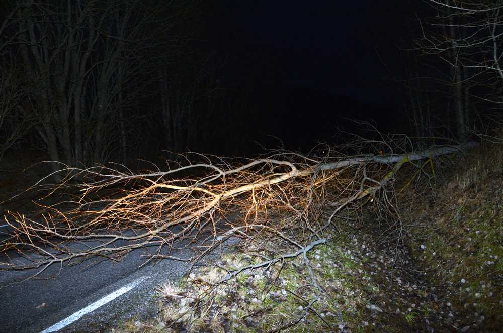 Lv 636 vid Groland blåste ett träd över vägen på morgonen. Trädet blockerade för bilar och bussar.
