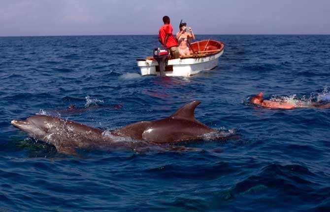 Utanför Zanzibar jagar man inte delfiner – här är det djuren som jagar båtarna. Att bada bland och fotografera delfiner är populärt bland turisterna.