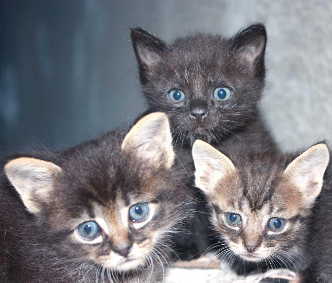 En kvinna i Hässleholm har sagts upp från sin hyresrätt, eftersom hyresvärden anser att hon har för många katter.