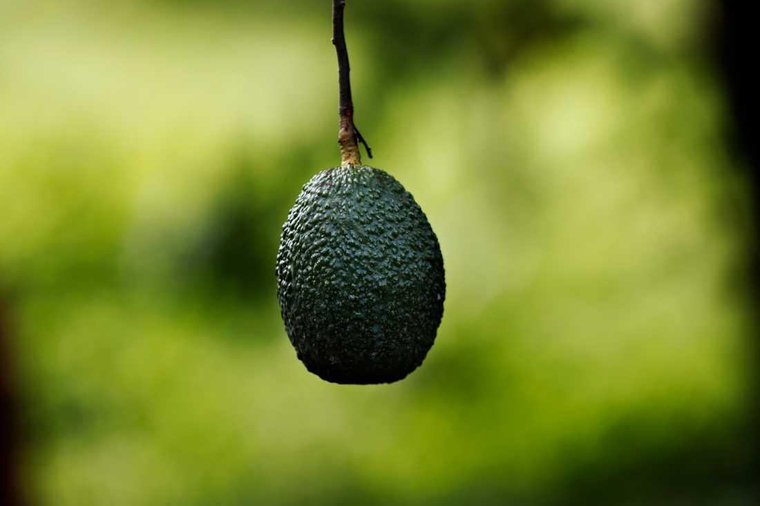 Att många av de tropiska produkterna odlas i regioner med hög biologisk mångfald är en viktig aspekt att tänka på för att äta hållbart. Arkivbild.