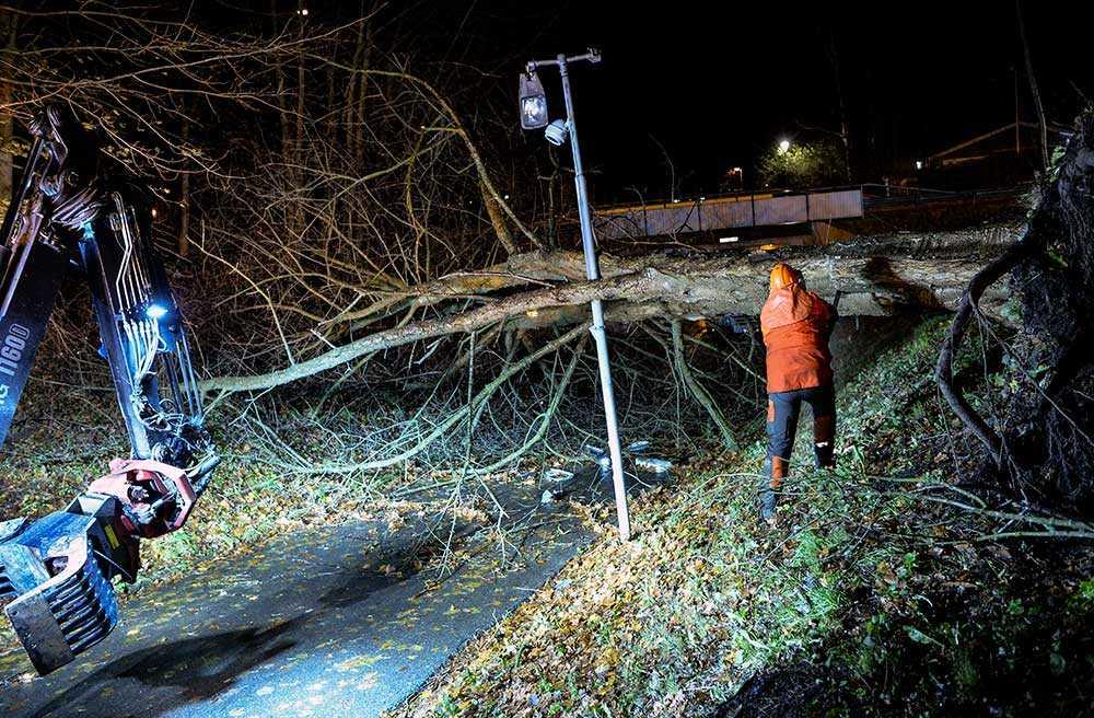 Stormfält träd och lyktstolpe på en cykelbana under Sockengatan i Helsingborg natten till måndagen.