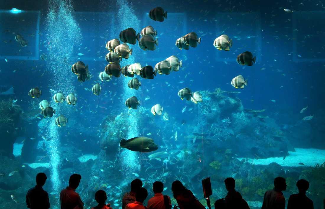 S.E.A. Aquarium rymmer 45 miljoner liter vatten och öppnades i november 2012.