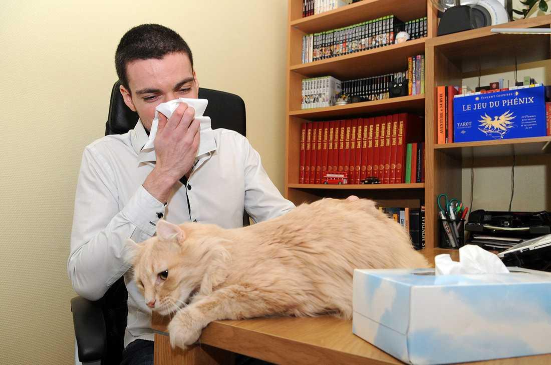 Mer än var tionde person i Sverige är överkänslig mot katter.