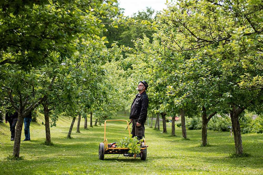 Under JAS-perioden är det dags att beskära träd och buskar i trädgården.